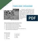 Proses Metabolisme Organisme Materi Kelas 12 Biologi