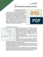 Metabolismo de los carbohidratos, lípidos y proteínas.docx