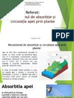 Mecanismul de absorbție și circulația apei prin plante