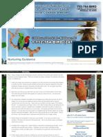 Http Www Birdsbyjoe Com Nurturing-guidance