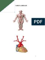 Vaskularisasi Extremitas Dr. Inmar