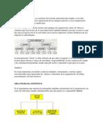 organigrama lineal.docx