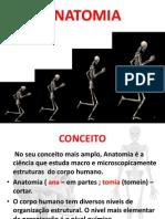 Aula Anatomia PDF