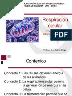 Respiracion Celular 2013-2