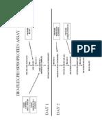 Phosphoprotein BioPlex Short Protocol