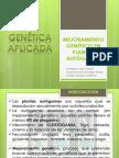 MEJORAMIENTO GENÉTICO EN PLANTAS AUTÓGAMAS_guillermo