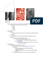 Orthopedi wiwi