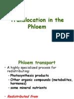 Talk 7 -Translocation in the Phloem