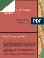 Interfaza Si Diviziunea Celulara