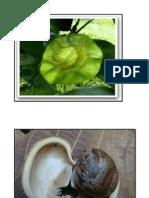 Rph Kemandirian Tumbuhan Kad Gambar Besar