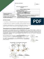 Guia Biologia Sinapsis y NT