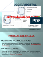 INTERCAMBIO CELULAR.ppt