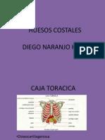 huesos costales