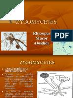 ZYGOMICETES-FUSARIUM (2)