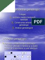 Pedigree Lp8