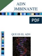 OI 1. ADN Recombinante