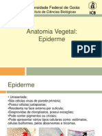 Anatomia Vegetal - Epiderme (1)