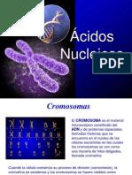 Acid Os Nuclei Cos