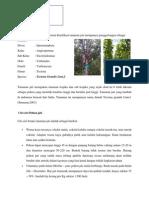 Klasifikasi pohon jati