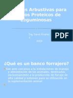 Especies Arbustivas Para Bancos Proteicos de Leguminosas
