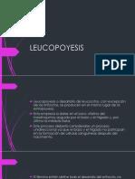 7-LEUCOPOYESIS