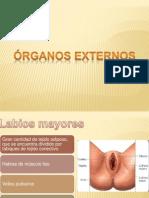 Ovarios y Ciclo Ovarico , Menstrual Corregido