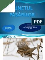 0_0_sunetul_pasarilor