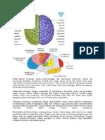 Otak Kanan Berfungsi Dalam Perkembangan EQ