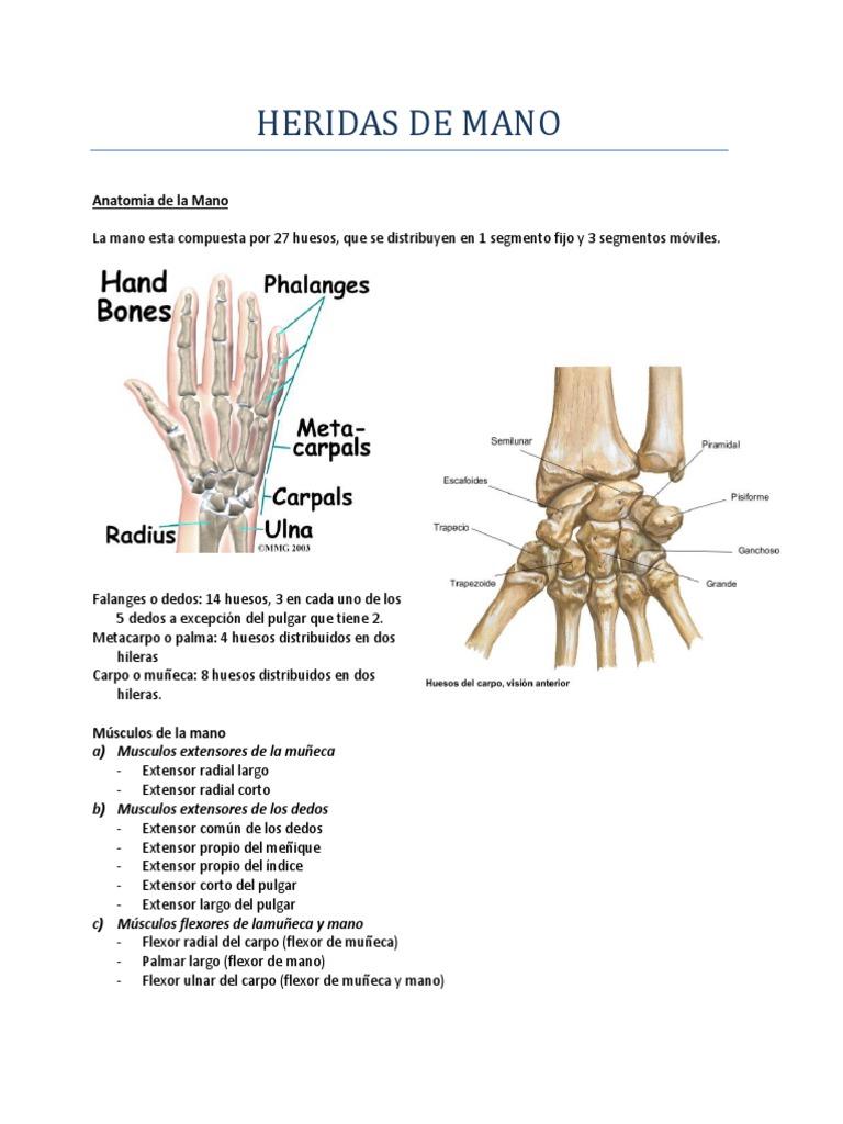 Moderno Anatomía Dedo De La Mano Viñeta - Imágenes de Anatomía ...