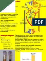 Vascular Lp4 Biomecanica