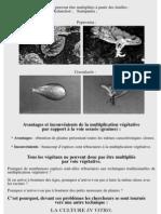 culture_in_vitro_3.pdf