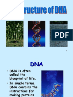 Dna Structure1