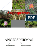 Angio Sperm as 2013