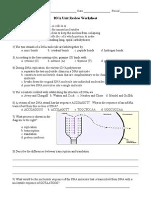 DNA Unit Review Worksheet | Transcription (Genetics ...