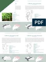 Especies Parte3 Flora Andevalo