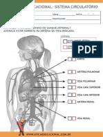 Sistema Circulatorio2