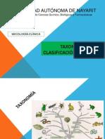 Taxonomía FUNGI