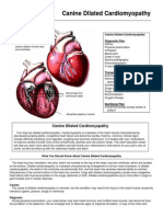 Canine Dilated Cardiomyopathy En