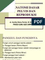Anatomi Pelvis Reproduksi