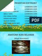 ANATOMI BELANAK