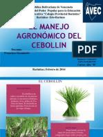 EL MANEJO AGRONÓMICO DEL CEBOLLIN 19-02-2014 [Reparado]
