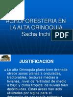 Alta Orinoquia-sacha Inchi