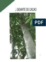 Comunidad Emagister 59144 Cacao
