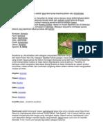 Bekicot Atau Achatina Fulica Adalah Siput Darat Yang Tergolong Dalam Suku Achatinidae