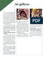 Ratas en Las Galleras