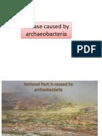 Archaeobacteria.pptx