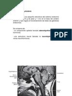 _Endocrinología-1