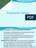 Respiración celular-clase