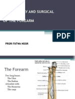 The Anatomy and Surgical Approach of Forearm