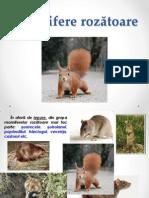 mamifere rozatoare